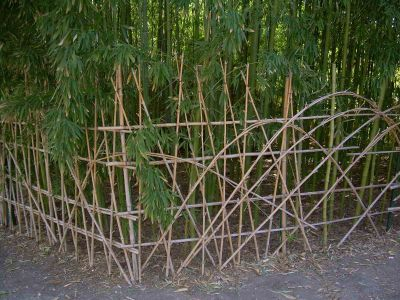 Bamboo Branch Photo Gallery Bamboo GardenMarks AAA Fence with